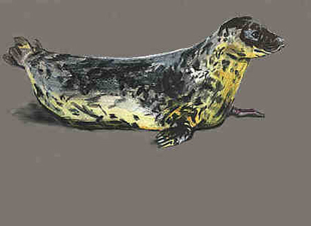 Full seal b
